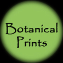 Botanical Prints Button